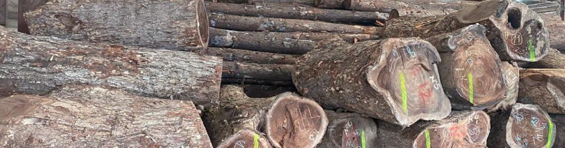 Đánh giá gỗ me tây sử dụng thực tế có tốt không ?